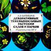 Декоративные теневыносливые растения садов и парков